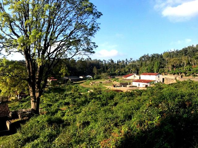 Indian Coffee Farm Estate